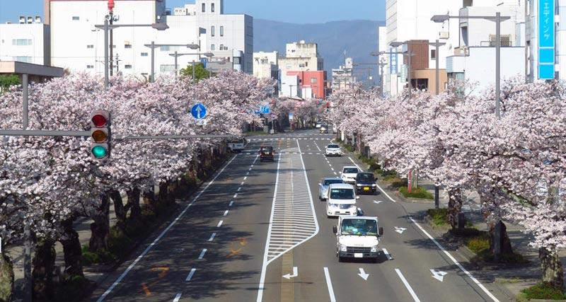 这是一座很赞的城市!福井市推出全新城市形象LOGO